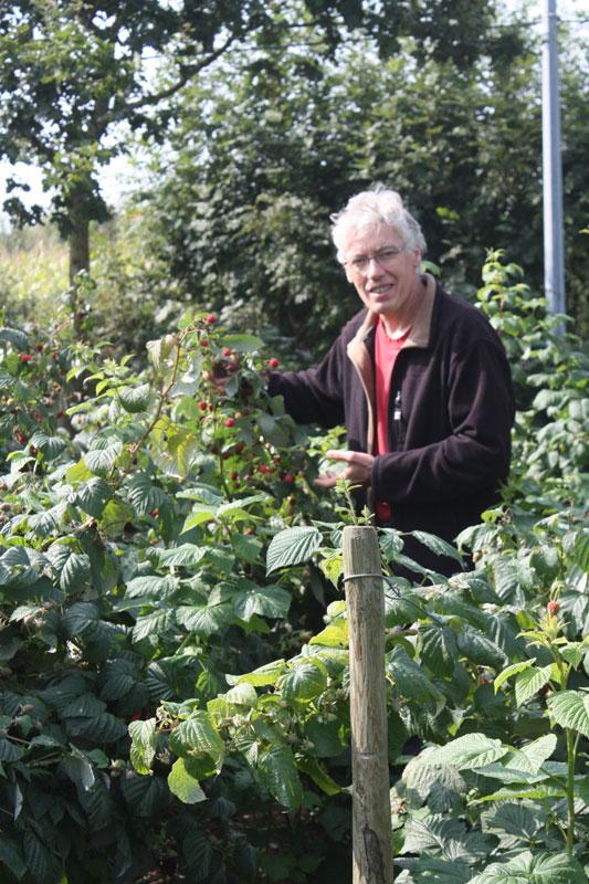 Jardinier-dans-les-framboises